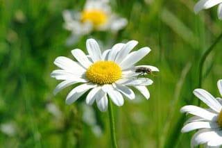 Astenia primaveral (again)