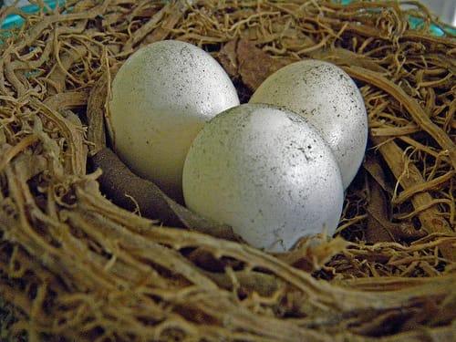 El síndrome del nido